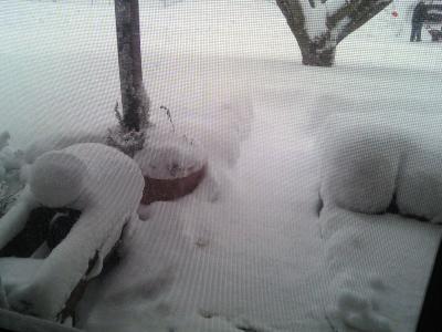 snow 2.10