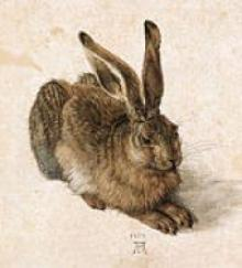 Young Hare by Durer