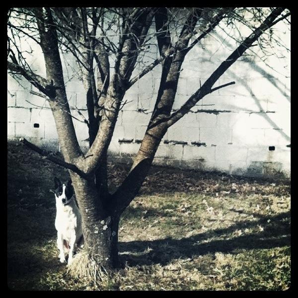 Oscar's tree