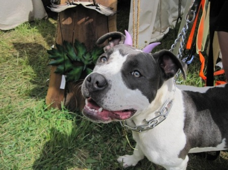Pixie dog