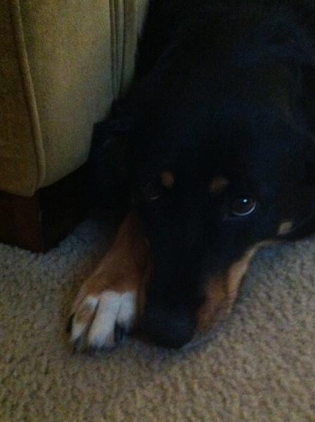 sad Lucy