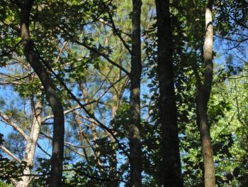 Artsfest trees